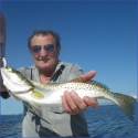trout-2-800