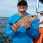 florida gray snapper