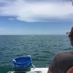 Anna maria Island Tarpon Fishing