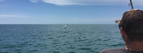Anna Maria Island Fishing Report: Captain Aaron Lowman – June 24, 2015