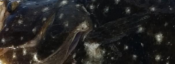 Anna Maria Island Fishing Report: Captain Aaron Lowman – July 7, 2015