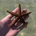 starfish-04-29-2013