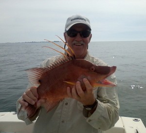 island discount tackle hogfish