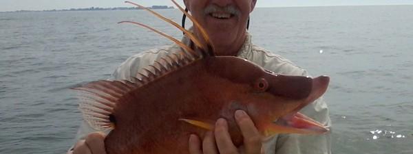 Captain Harrison King – Fishing Report – 02/10/13