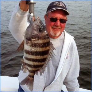 Big sheepshead are on the artificial reefs in Tampa Bay.
