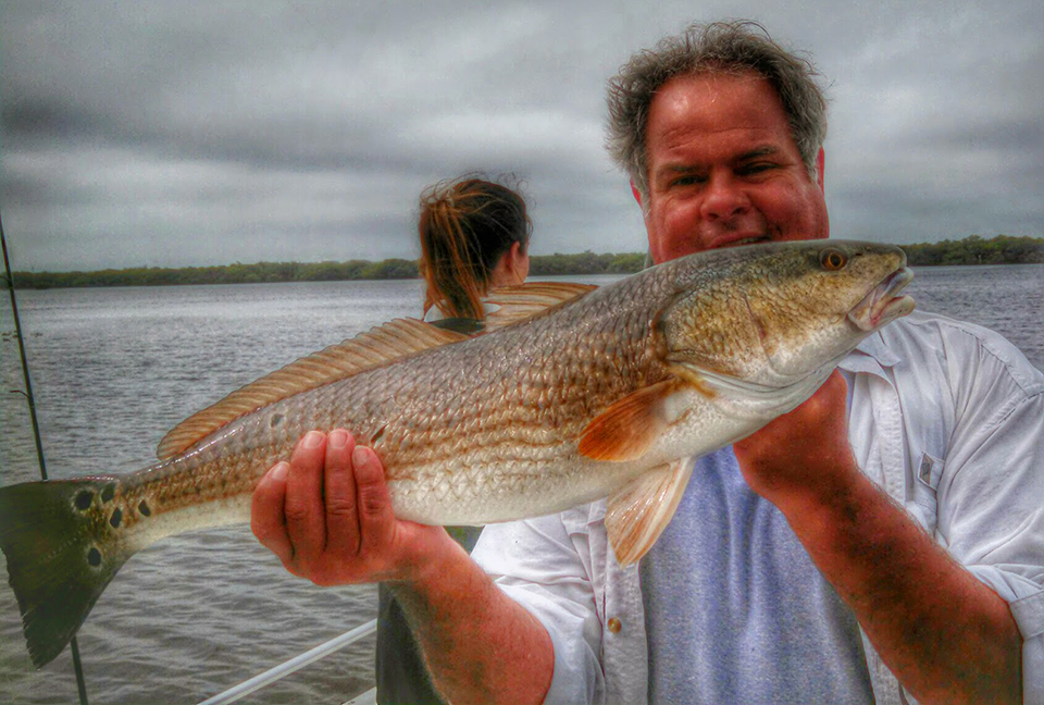 anna maria island redfish october 2014