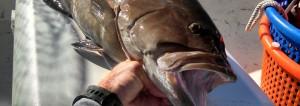 anna maria island fishing report nowvember 2014