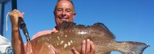 anna maria island grouper