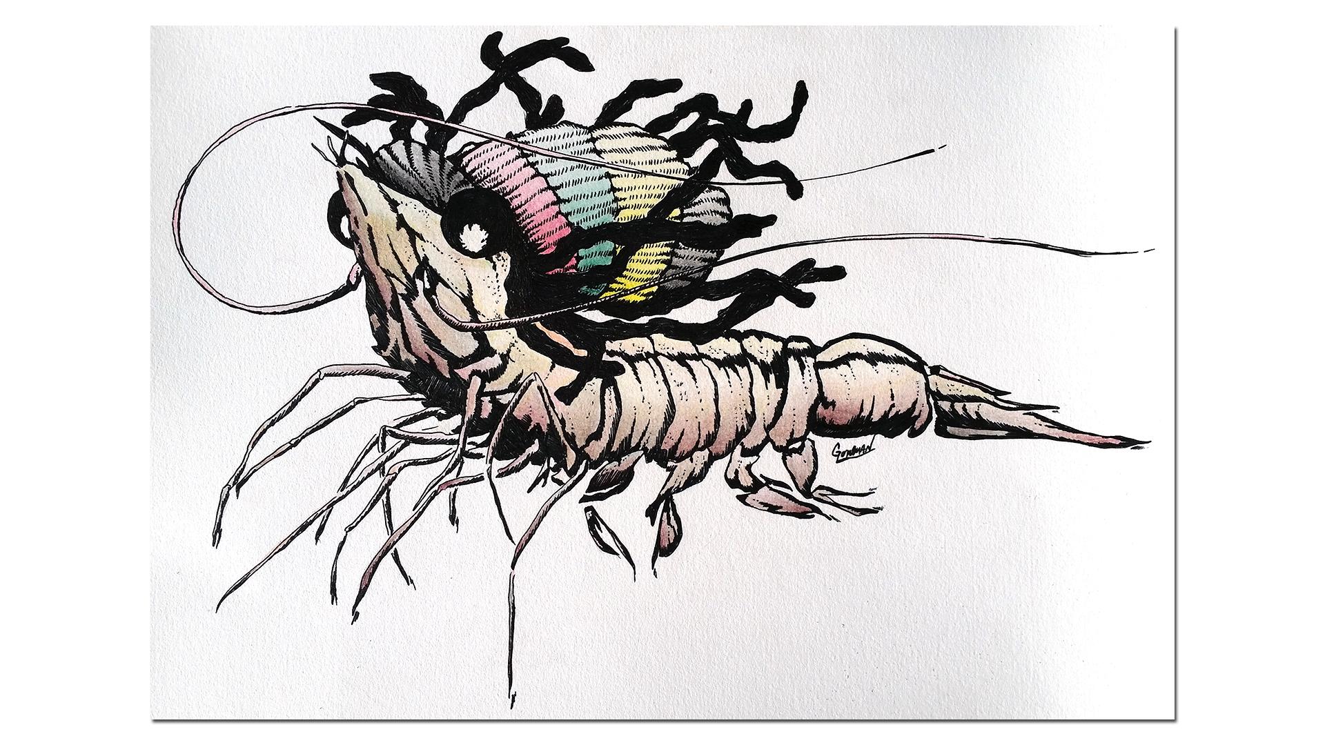dred shrimp island discount tackle mascot