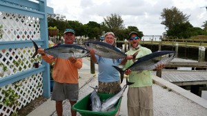trio of blackfin tuna