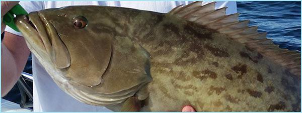 Anna Maria Island Fishing Report: Captain Aaron Lowman – October 25, 2015