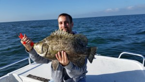 Huge Tripletail