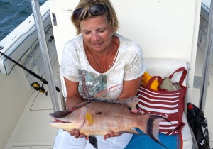 big hogfish