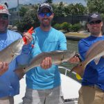 redfish trio